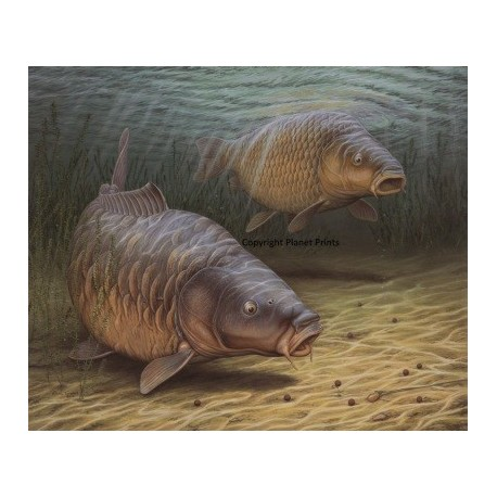 Planet Prints Two Carp by Chris Turnbill